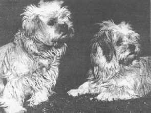 B&W Lhasa Picture